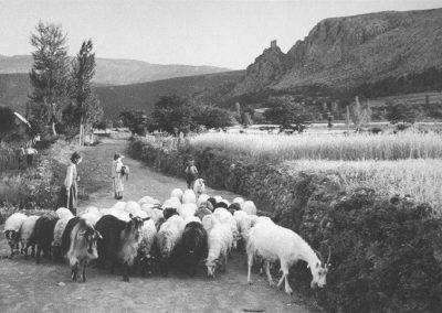 kosore_1953